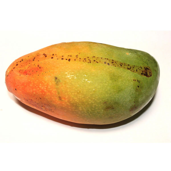 Mango Importació