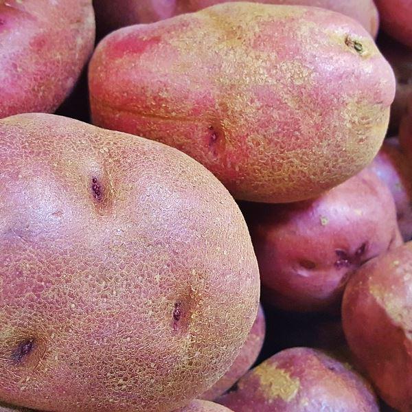 Patata Roja Gra.